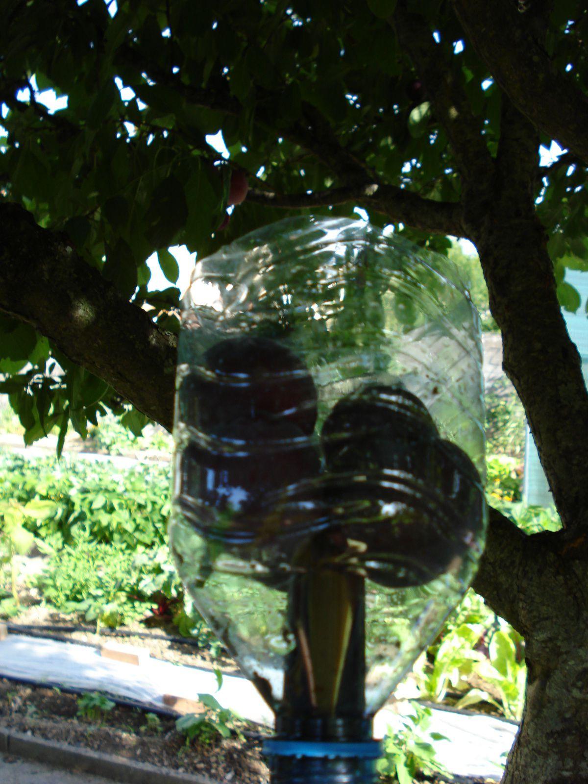 un cueille -fruit   économique  : le haut d'une bouteille d'eau et un manche à balai dans le goulot  et hop !