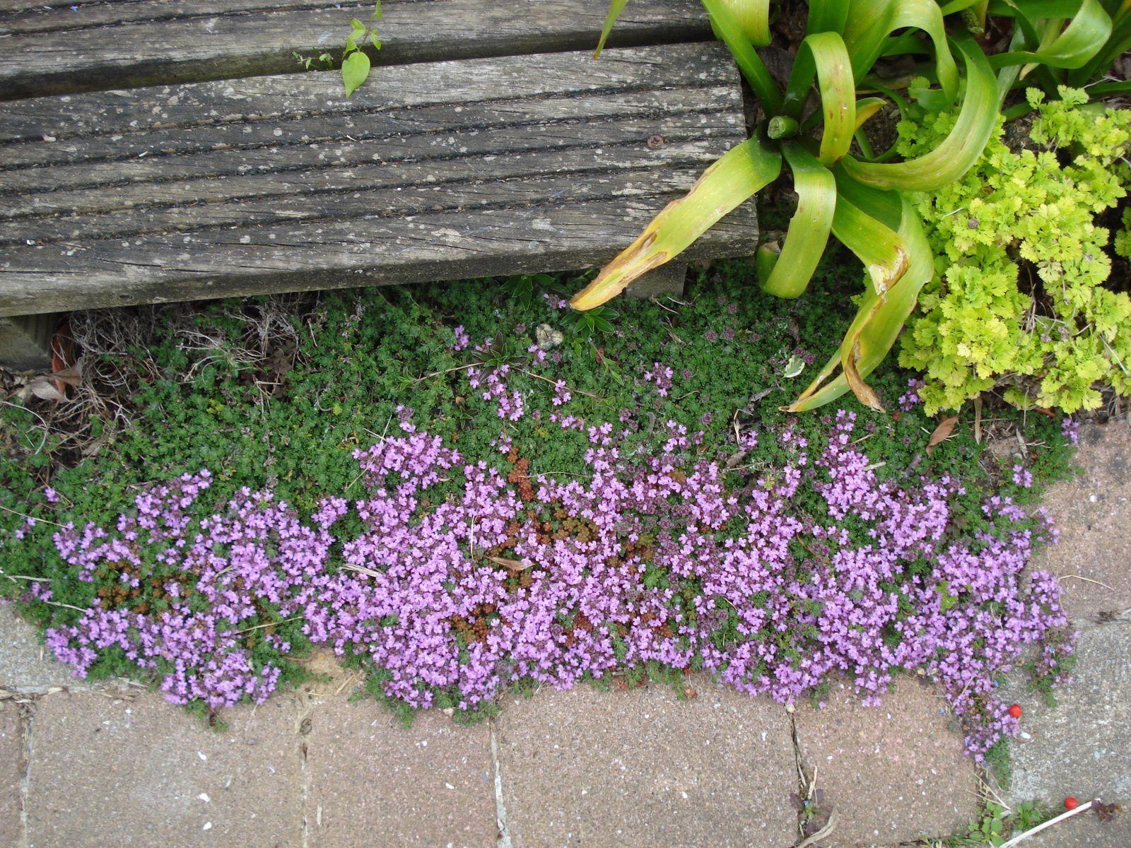 la végétation , le fleurissement  est en retard, par rapport à 2015 !