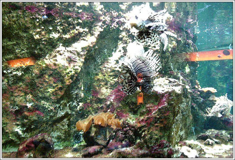 Aquarium de Lyon (La mulatière) - 3/4