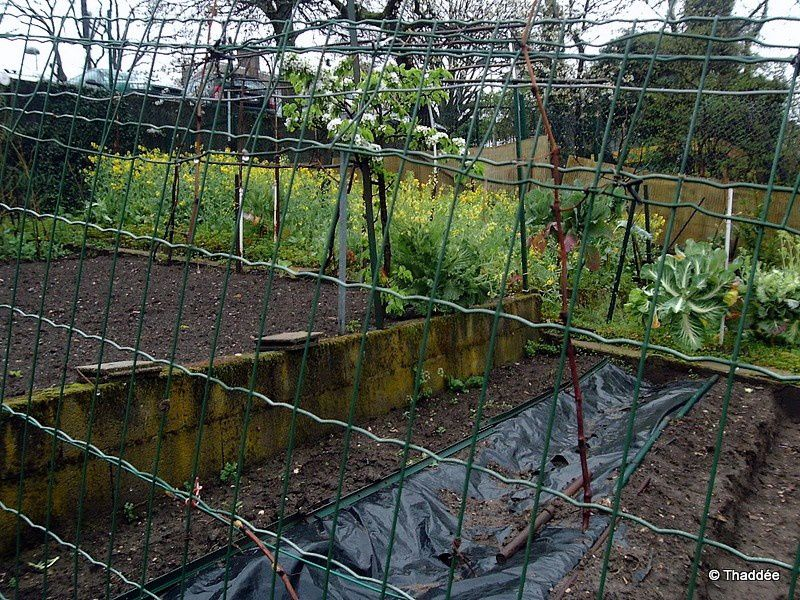 Cité Cropel, jardins secrets