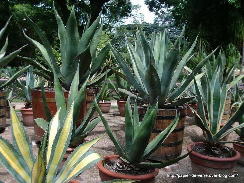 Les plantes exotiques du parc de la Tête d'Or