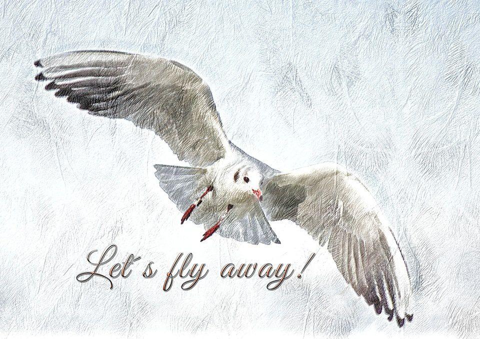 Pixabay, images libres de droits