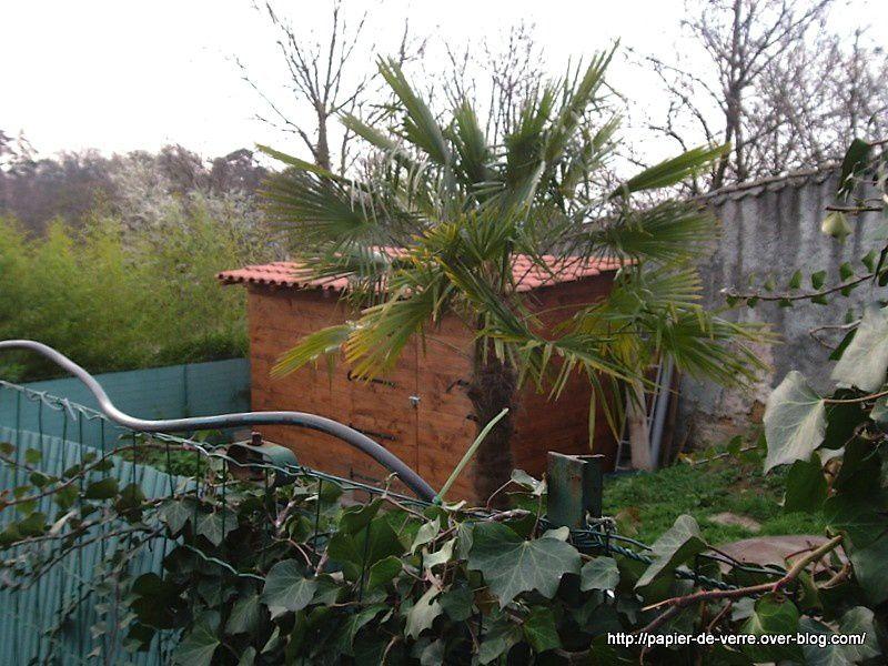 Voilà un palmier qui attend impatiemment les premiers rayons de soleil