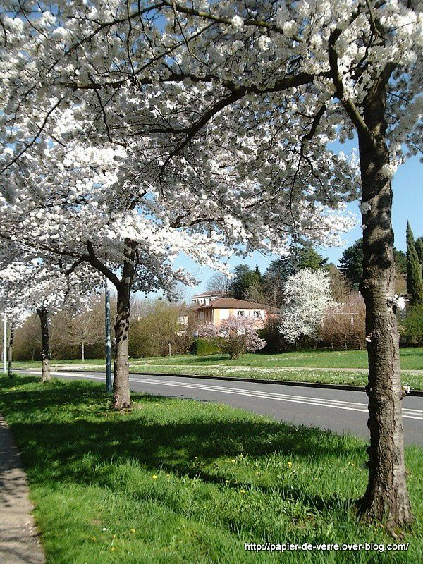 Chemin Des Prés, Sainte-Foy-lès-Lyon