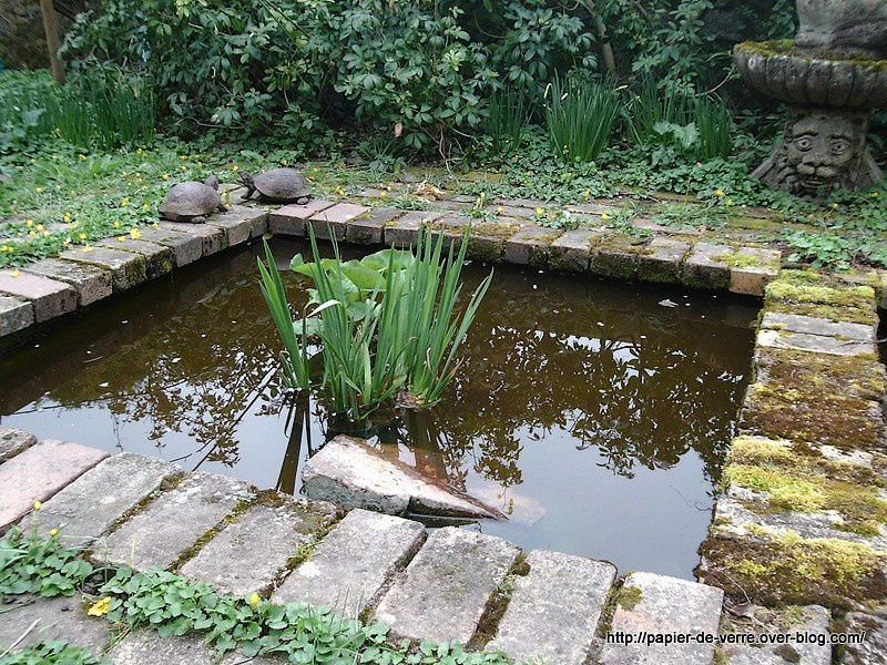 Une vraie tortue vit dans ce bassin. Les deux qu'on aperçoit au bord sont des fausses.
