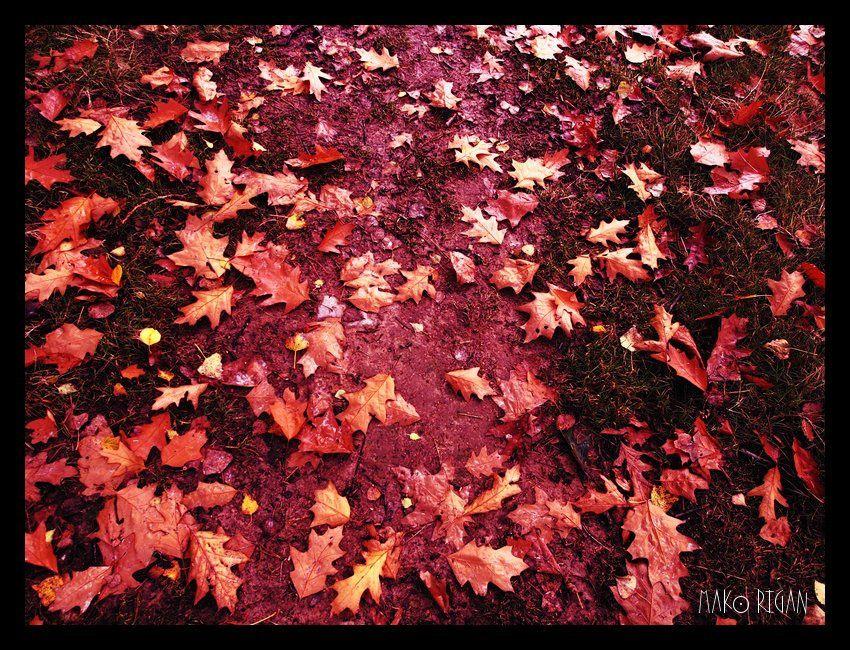 Sol tapissé de feuilles de chênes