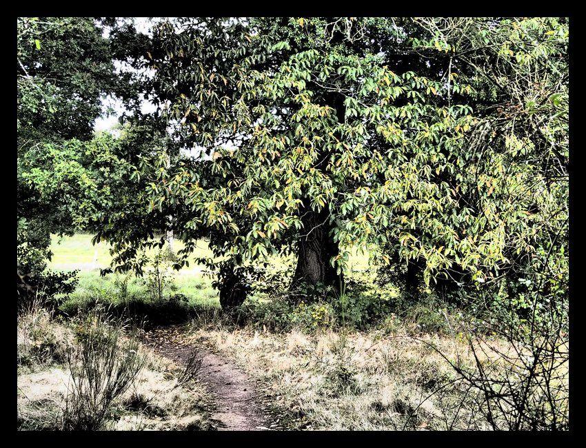 Un arbre magnifique, et derrière une femme-fée.