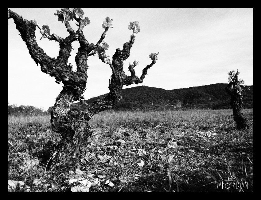 Ardèche White &amp&#x3B; Black
