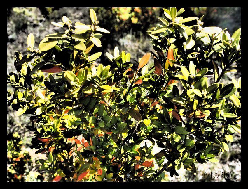 Ardèche en couleurs (1)