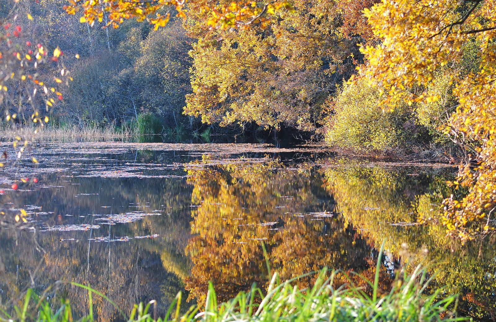 Automne sur l'étang de Loudon.