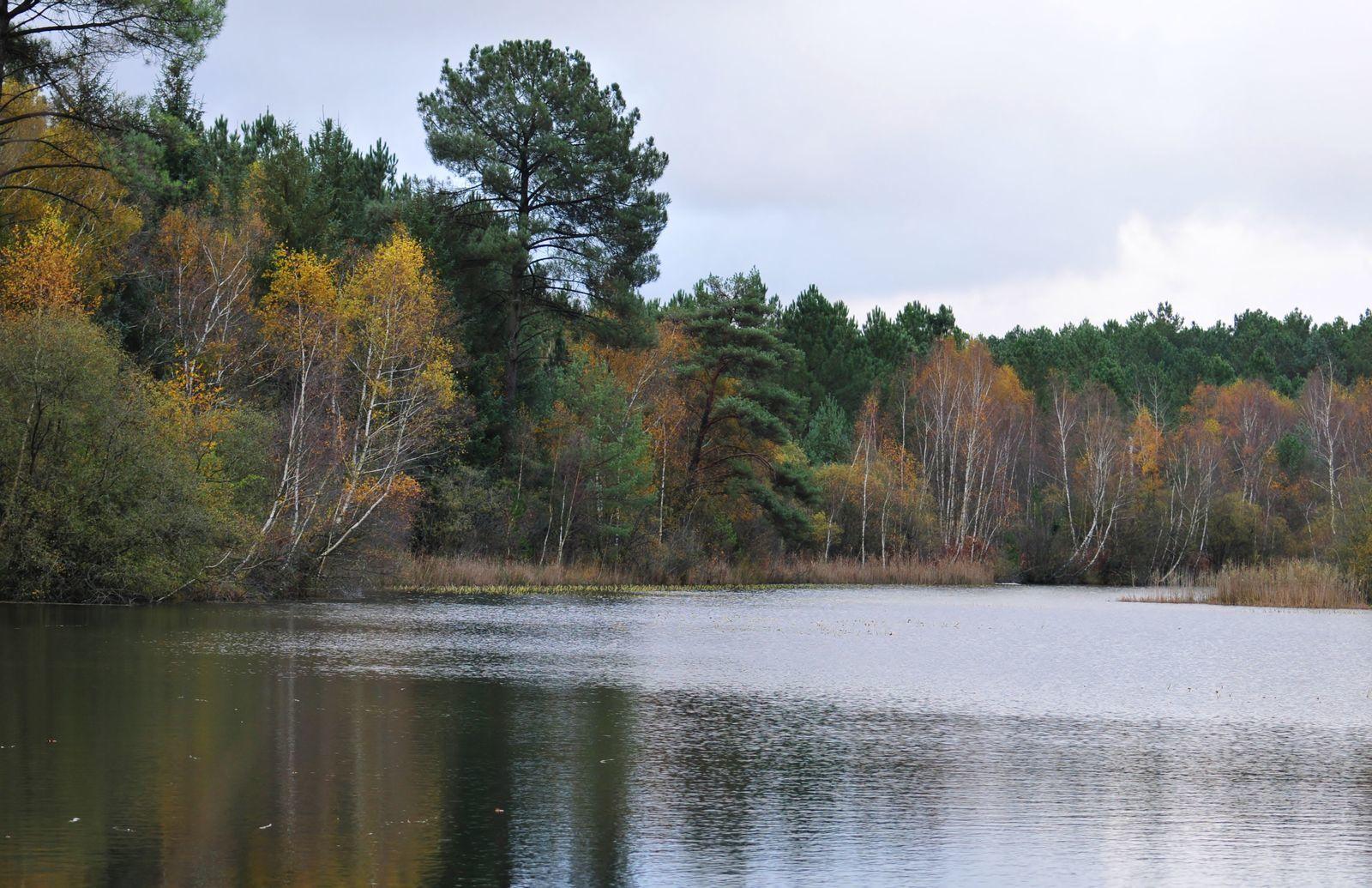 Couleurs d'automne sur l'étang de la Gardonnière.