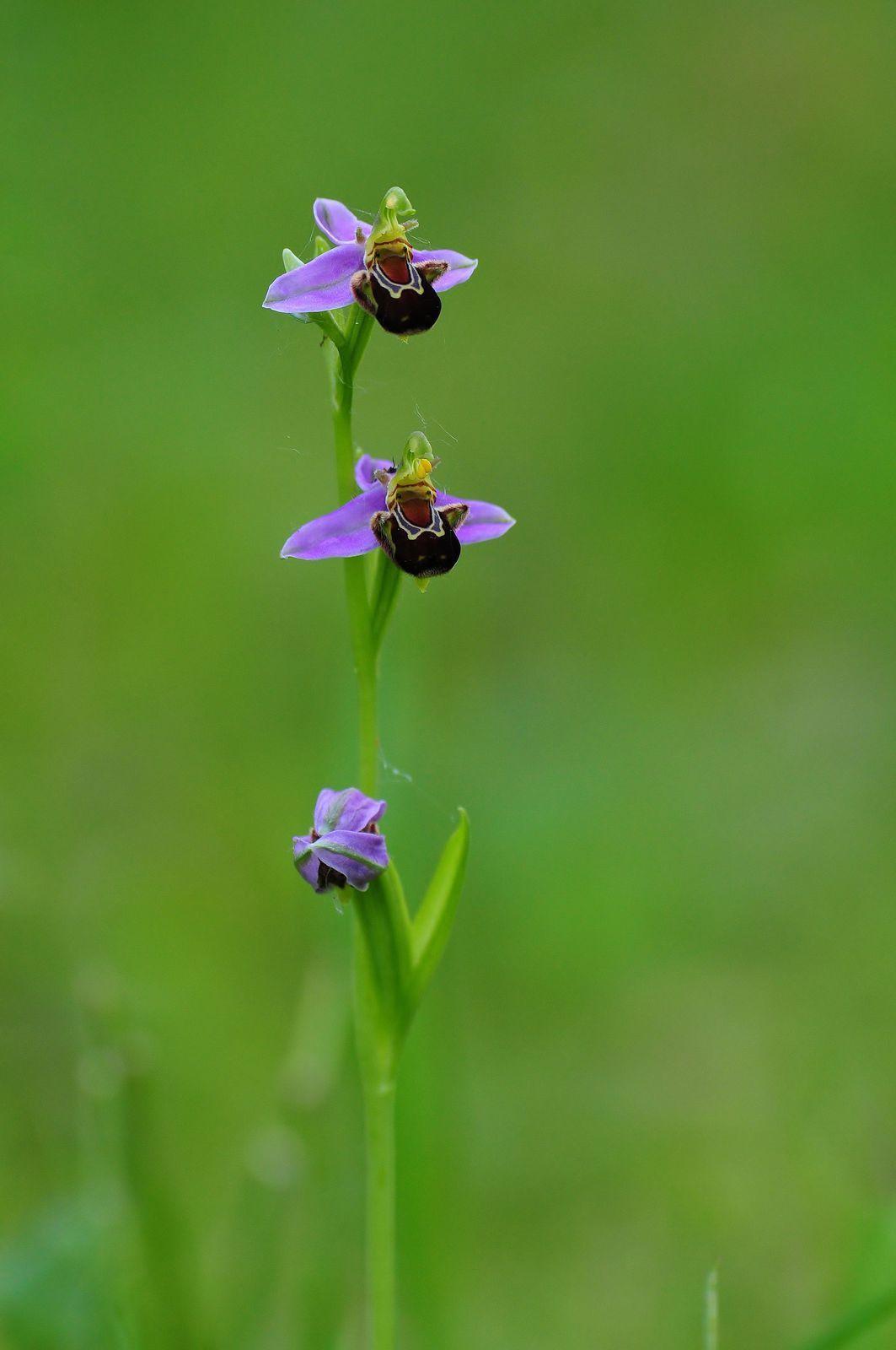 Quelques orchidées.