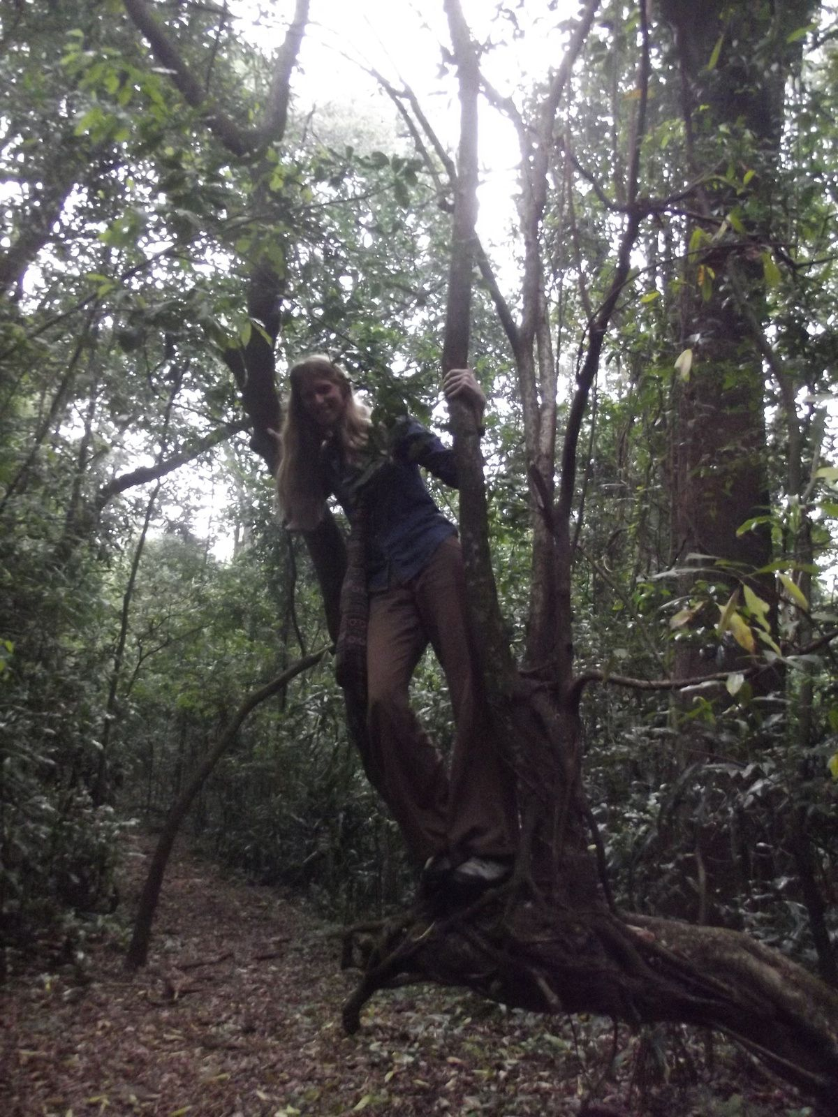 Photos - videos Kakamega Forest