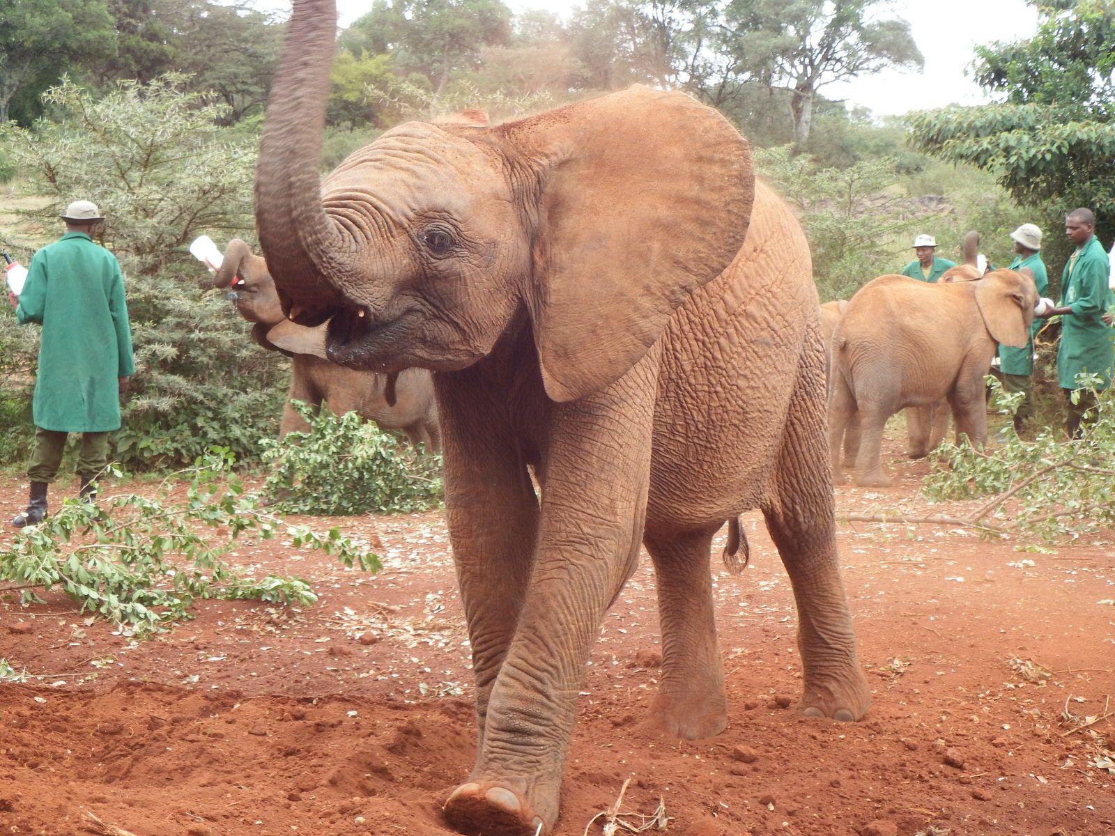 Nairobi (Orphelinat des éléphants et maison de Karen Blixen)