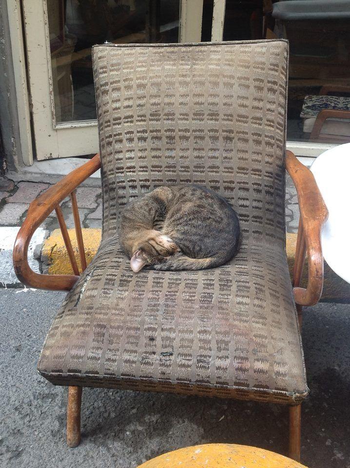 &quot&#x3B;Heureux comme un chat d'İstanbul&quot&#x3B;....
