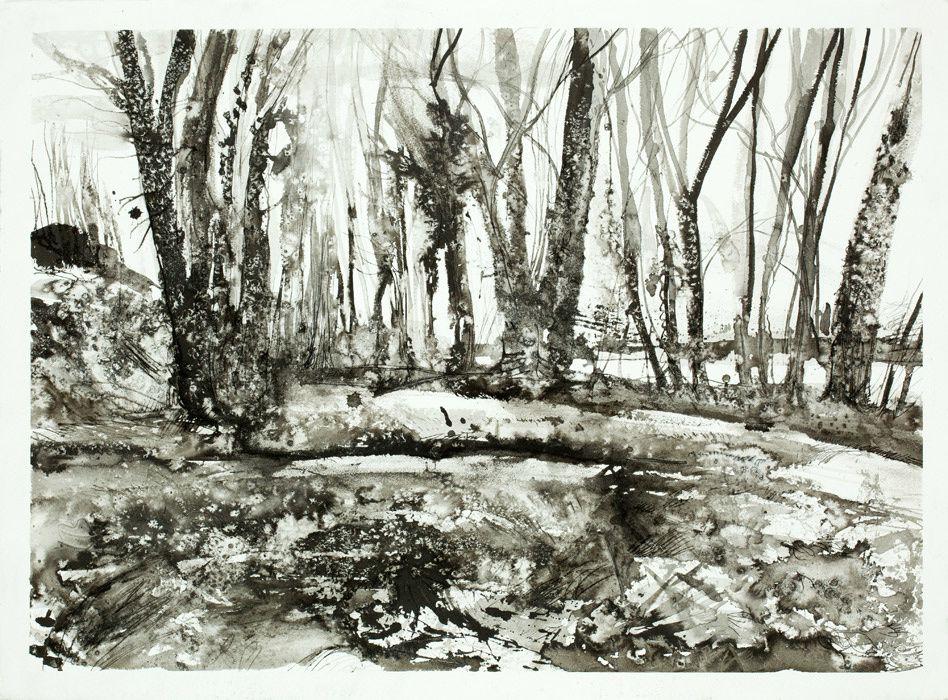 Bocages, encres de chine et fusain sur papier, 76 x 56 cm, 2011