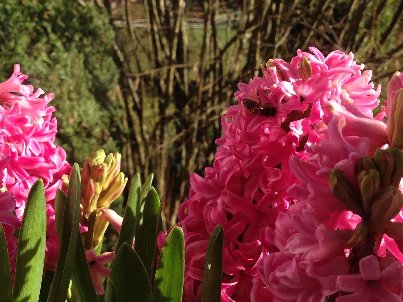 2. Voir des abeilles butiner en plein mois de Janvier et apprécier le rayon de soleil