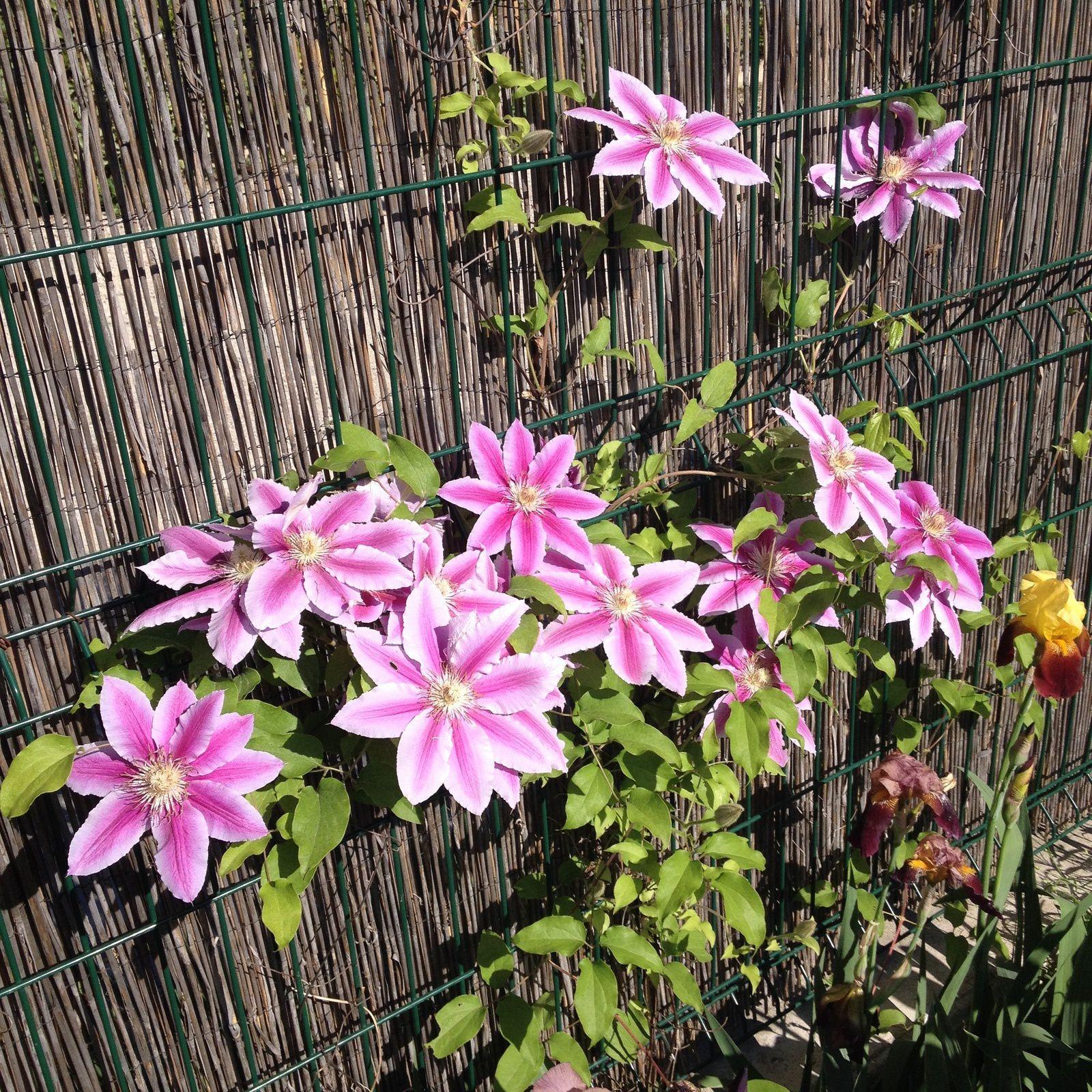 10. S'extasier sur notre jardin qui fleuri
