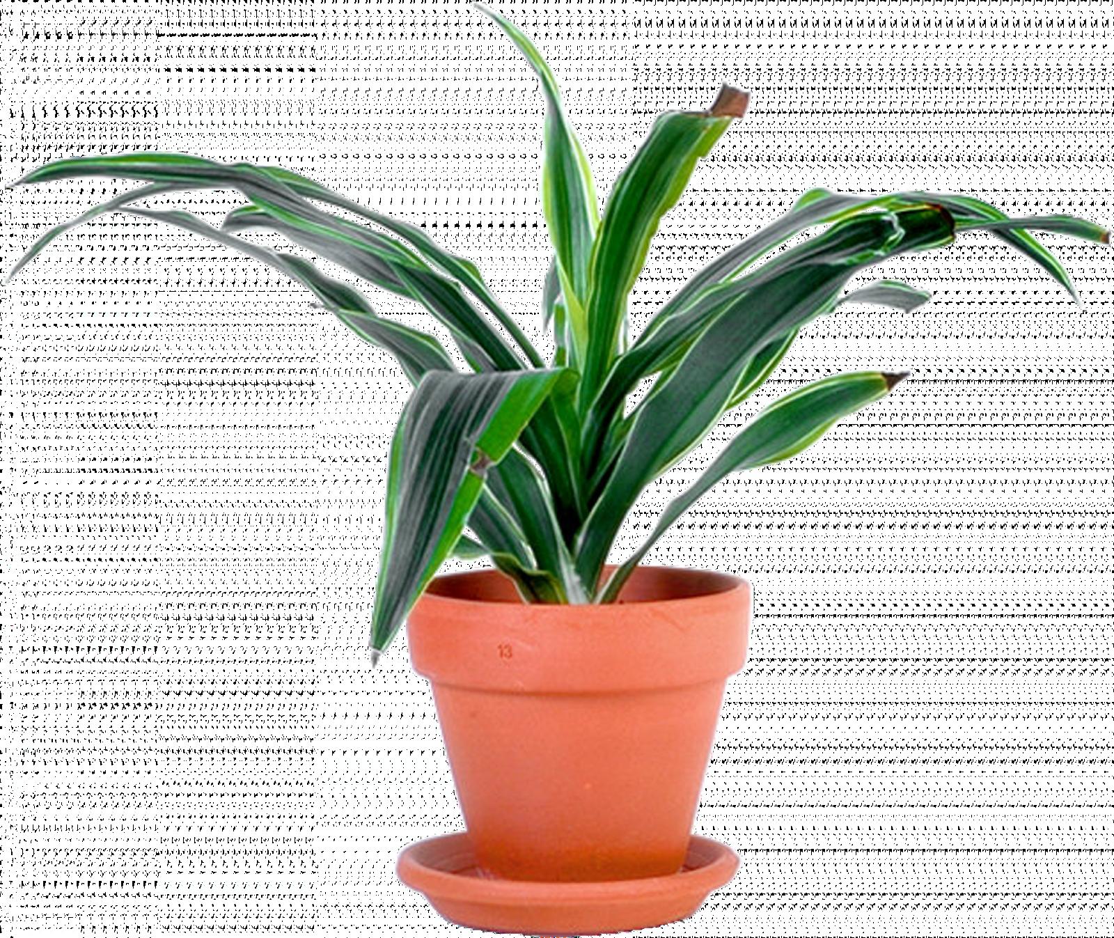 Planty, rectrice de l'Académie Impériale de Moncul et porte-paroles de The Tech Genius