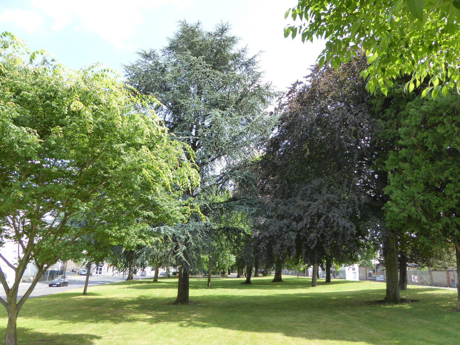 Sur le Mail Rocheplatte, on peut compter des arbres centenaires et des arbres remarquables protégés par le Plan Local d'Urbanisme