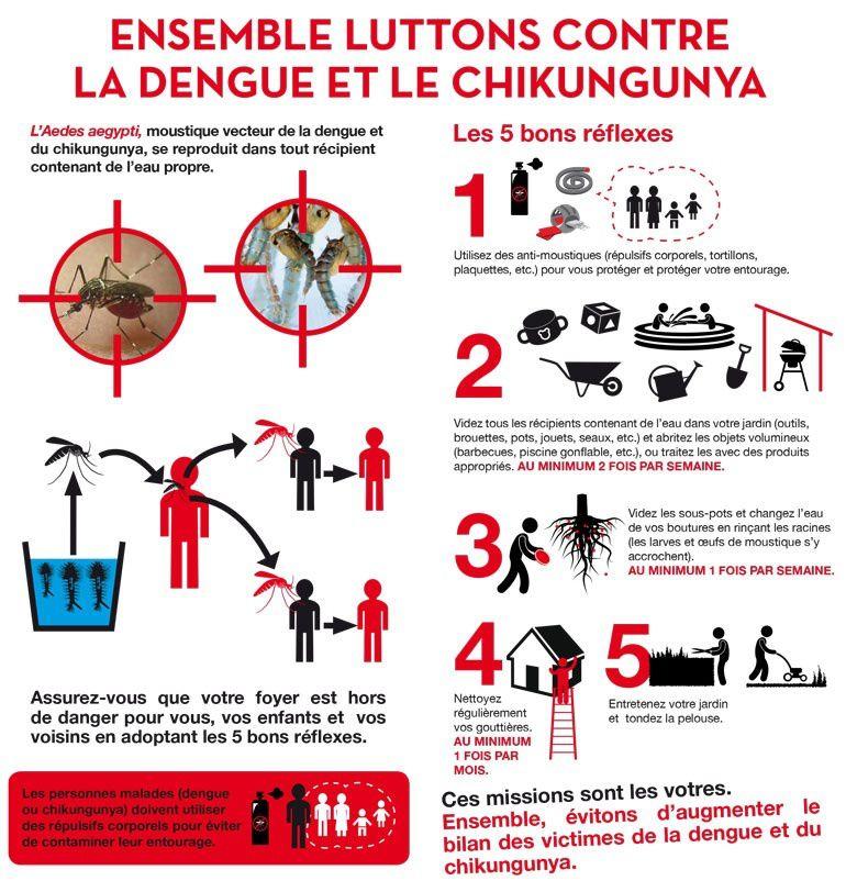 Portrait d'un tueur: l'Aedes Aegypti