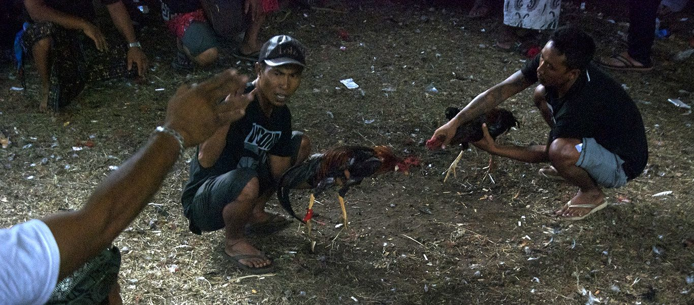Cockfighting and gambling prior to the full moon ceremony...