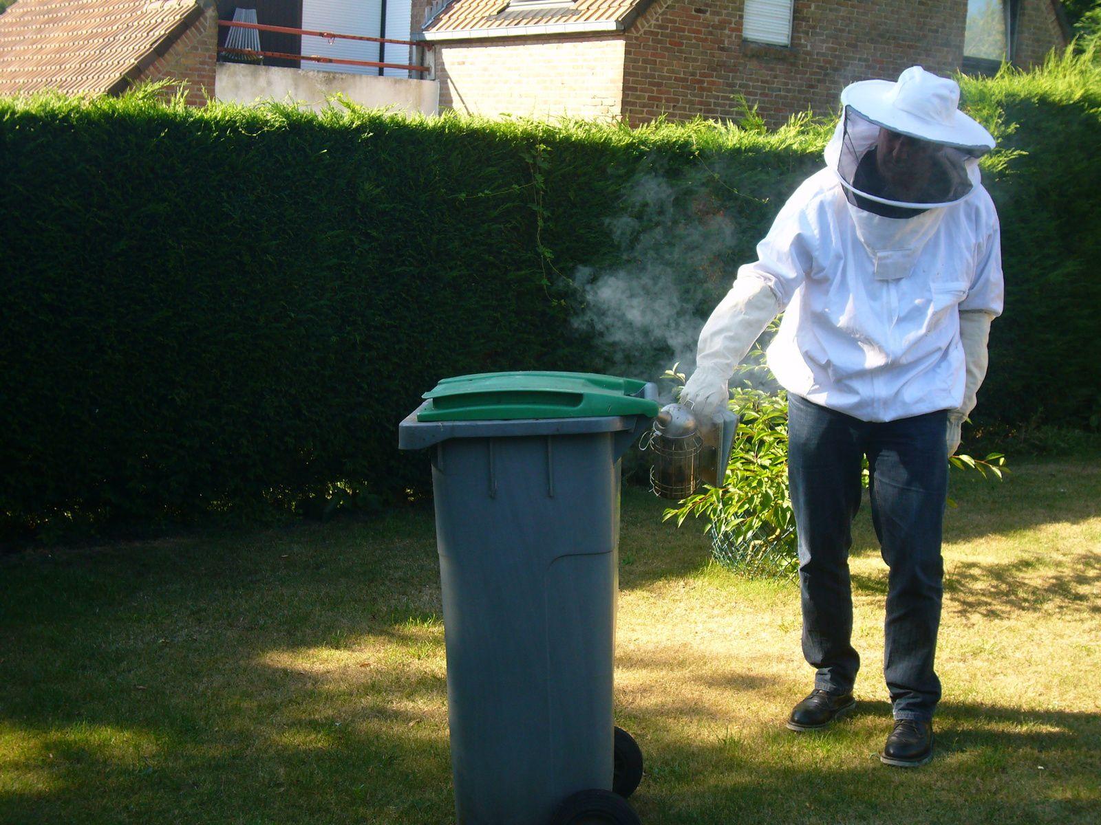 Essaim récupéré dans une poubelle de déchets de jardin