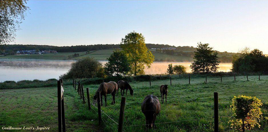 Le lac, les chevaux