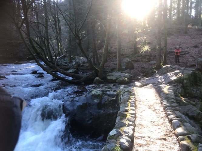 Sortie au bois des Forts le dimanche 12 janvier