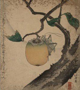 """Hokusai, """"Sauterelle rongeant un fruit de plaqueminier"""""""