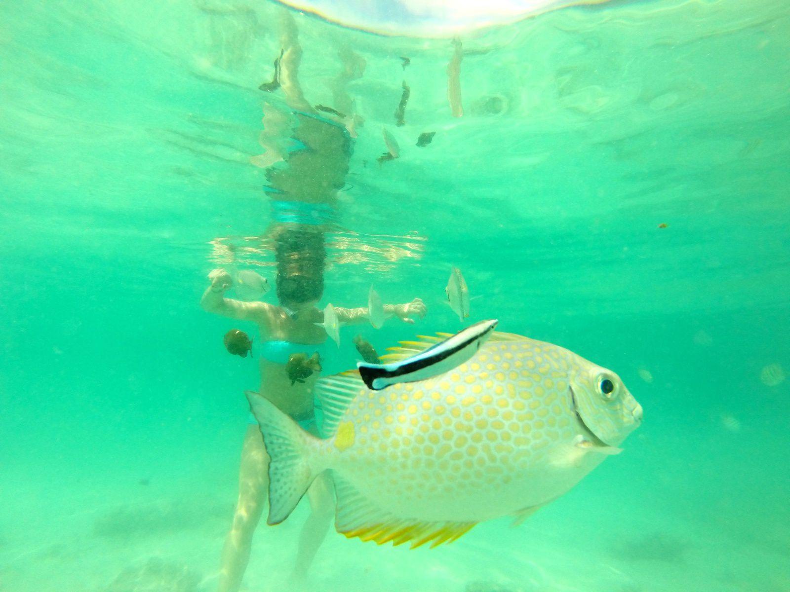 Perhentian Islands - Perhentian Resort / Turtle Beach