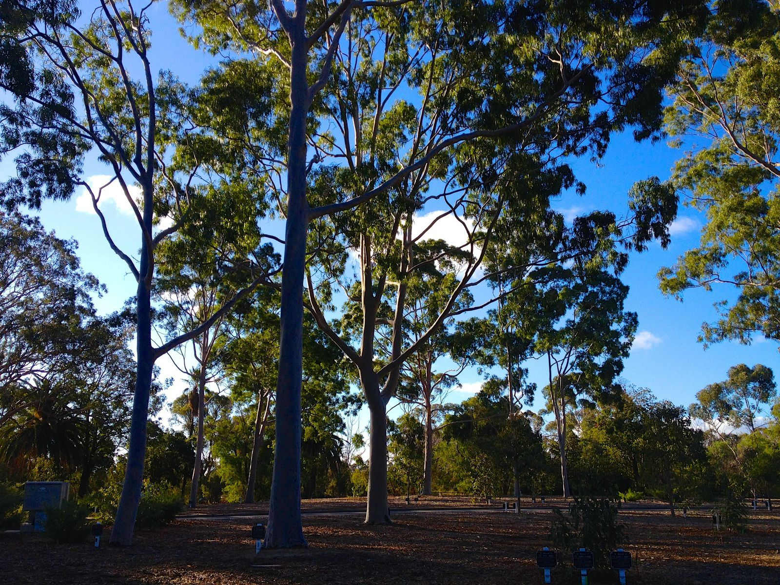 King's Park, Perth