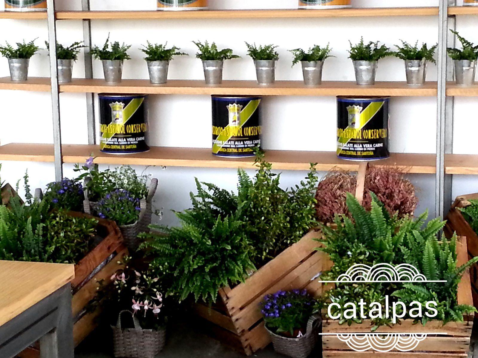 Helechos en terraza de Cenador de Amós - Catalpas Centro de Jardinería