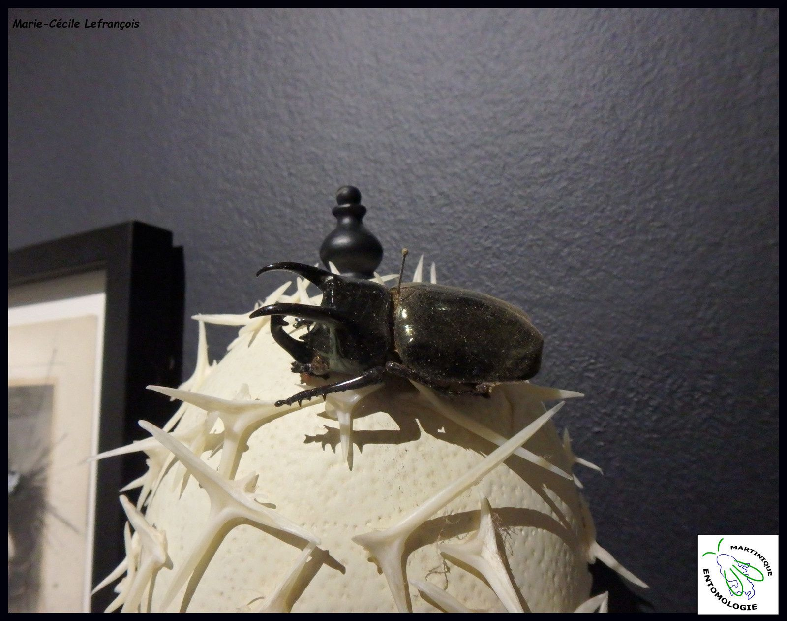 Art et Insectes: Le Mariage parfait