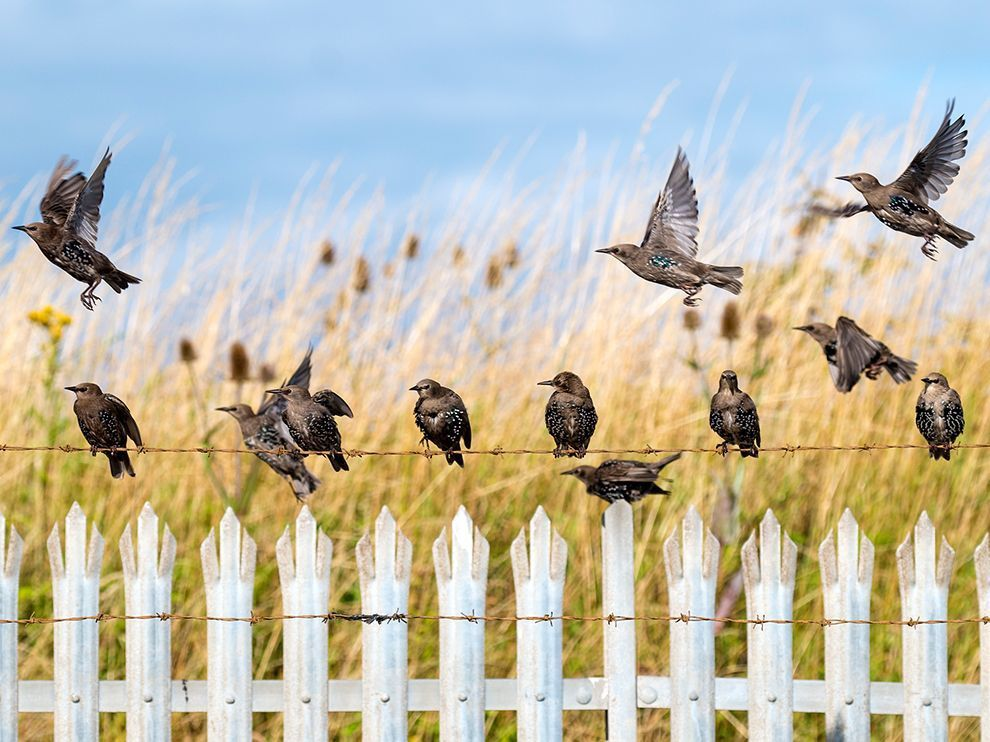 Source: http://photography.nationalgeographic.com/photography/photo-of-the-day/starling-flock-uk/