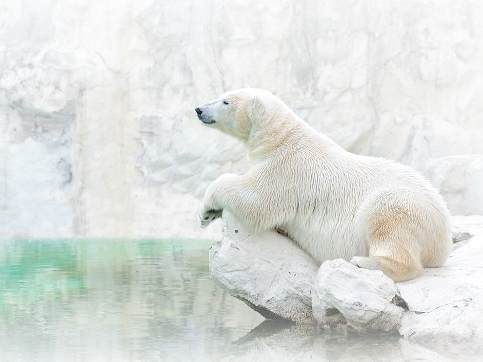 Source: un ours heureux et tranquille pour illustrer cet article :D http://socksonanoctopus.com/blog/2014/05/national-geographics-photo-day-white-white/