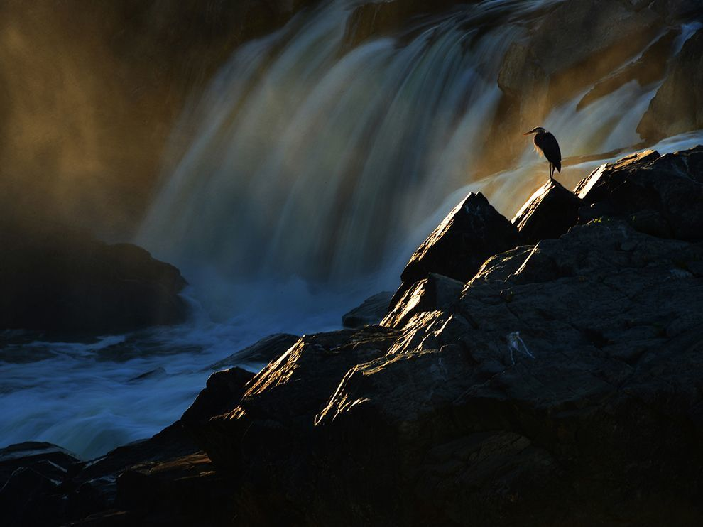http://photography.nationalgeographic.com/photography/photo-of-the-day/blue-heron-great-falls/