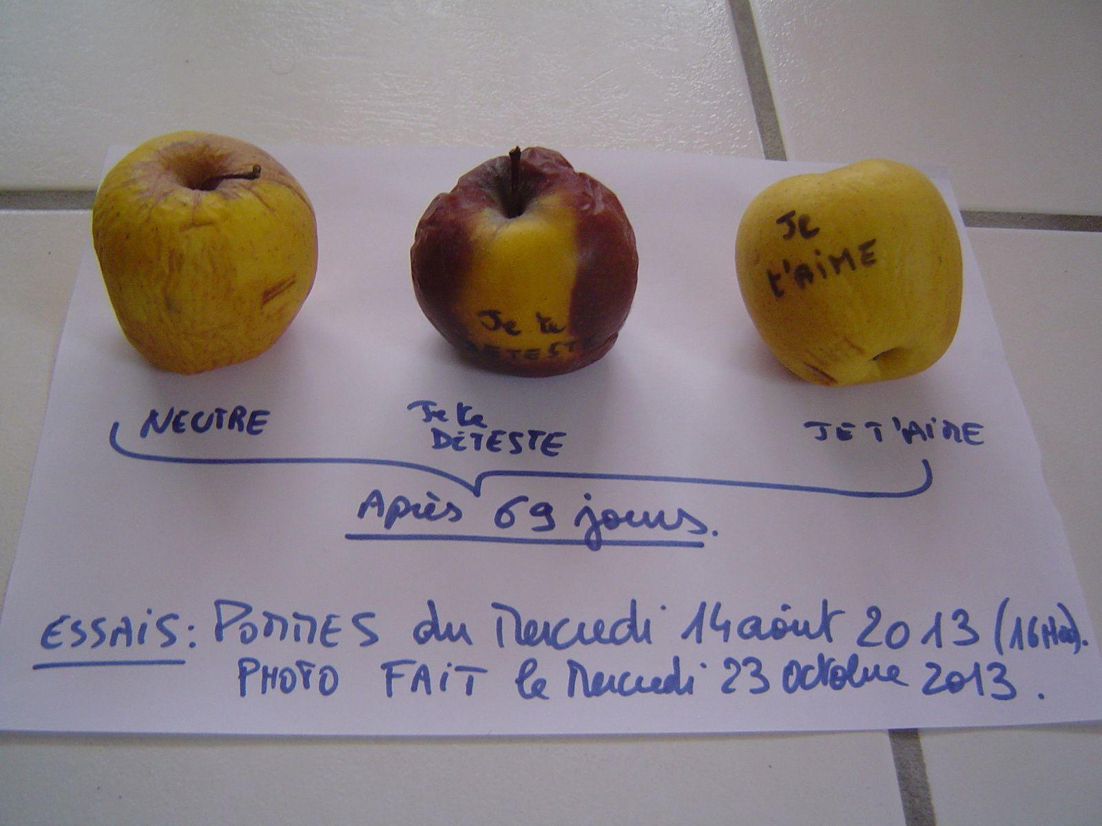 Photo1: Expérience faite sur trois pommes qui datent du 14 août 2013.