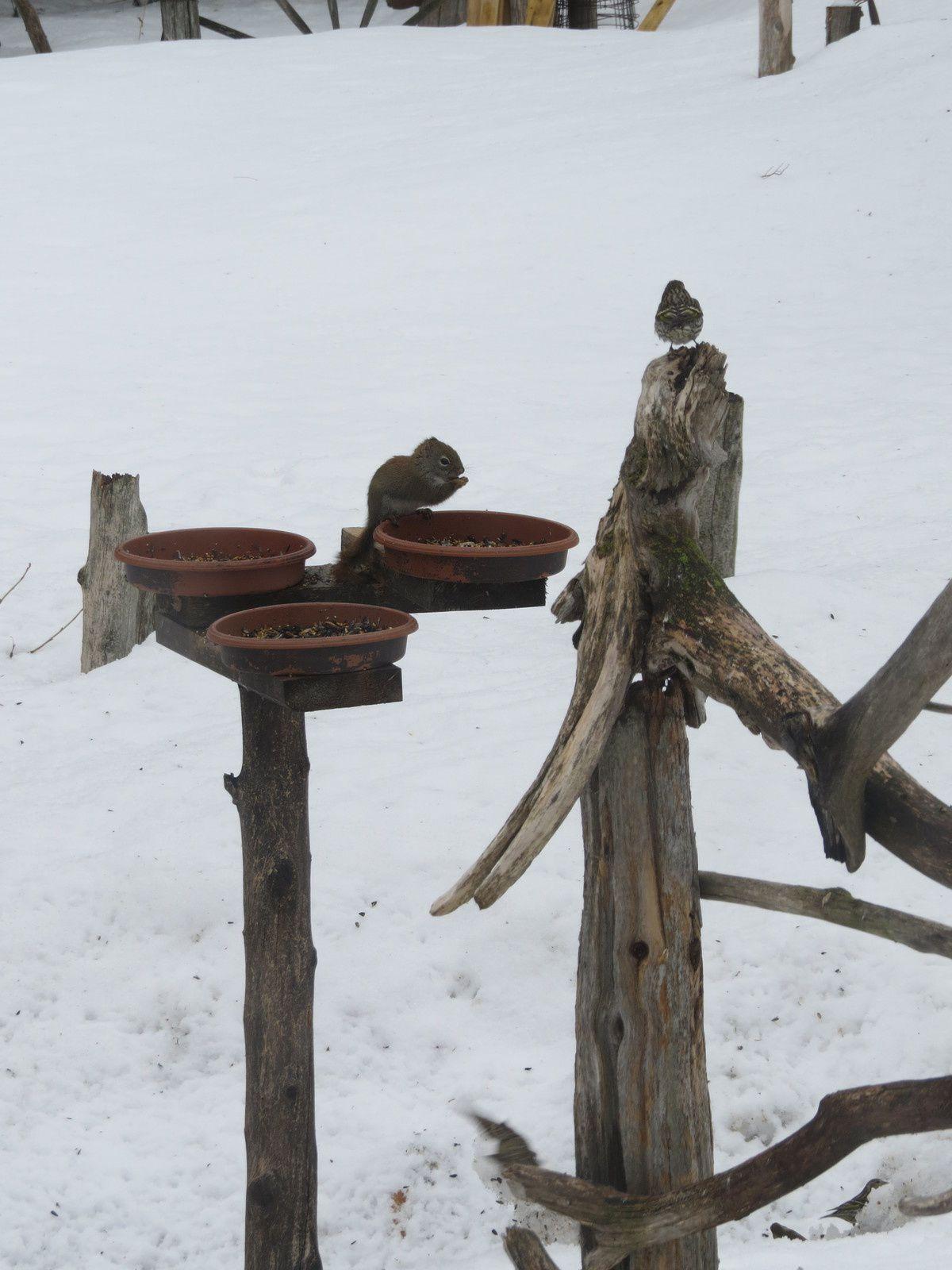 L' oiseau et l' écureuil .........