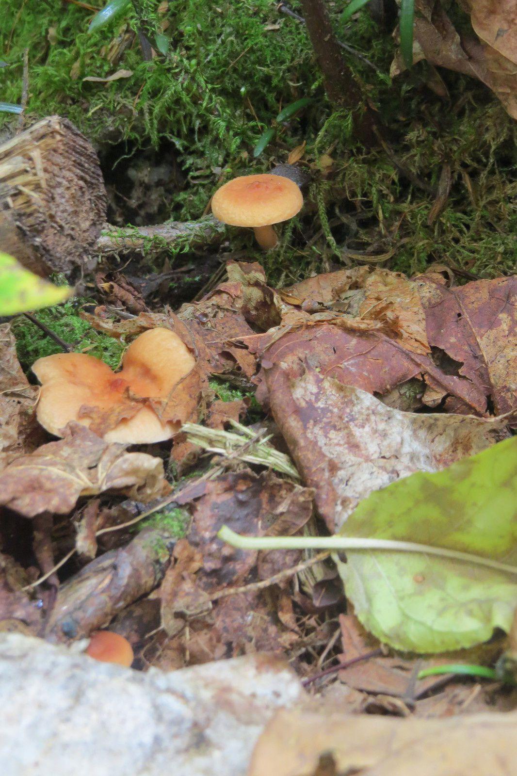 Des champignons comme des tableaux ...( Page 1 )