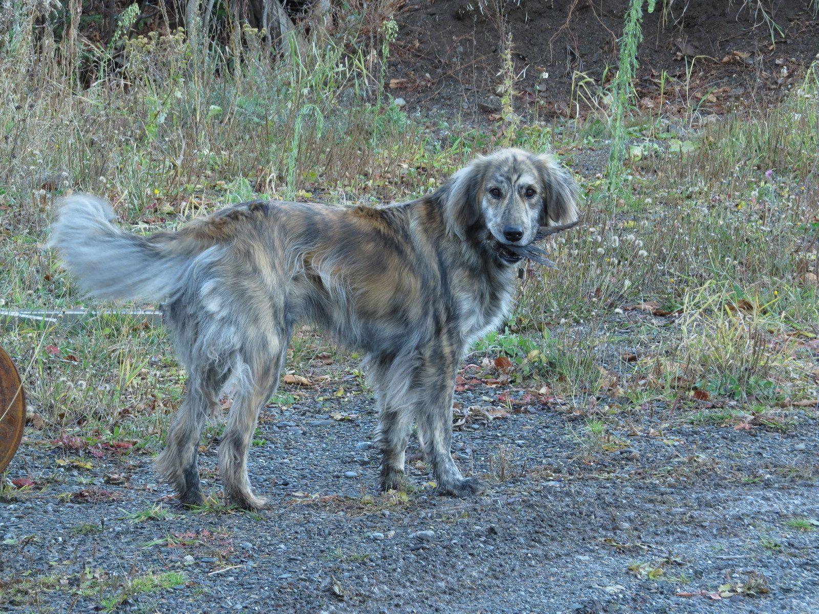 Max , notre chien .