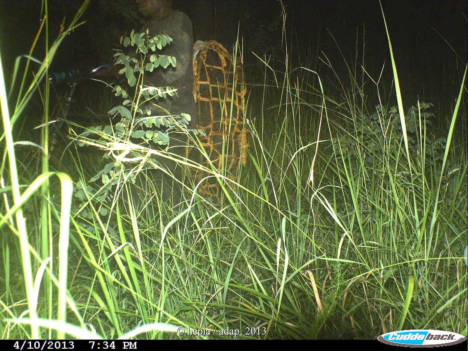 Poacher carrying bushmeat captured by camera traps in 2013 in the Beekeeping Zone