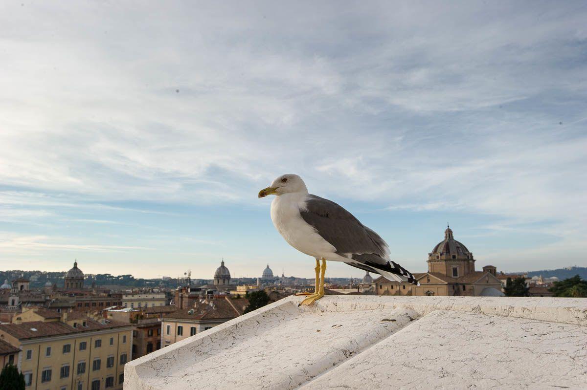 La Rome insolite et cosmopolite