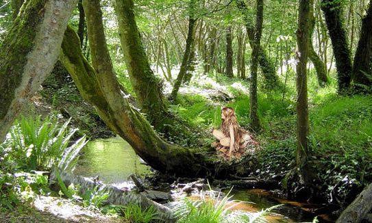 Brocéliande, un univers médiéval dans des forêts fantastiques.