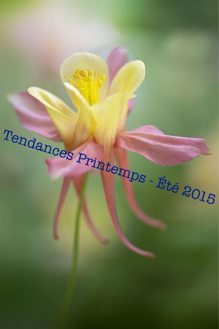 Tendances Printemps-Été 2015