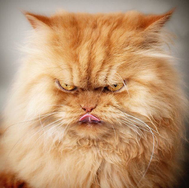 Garfield !!!