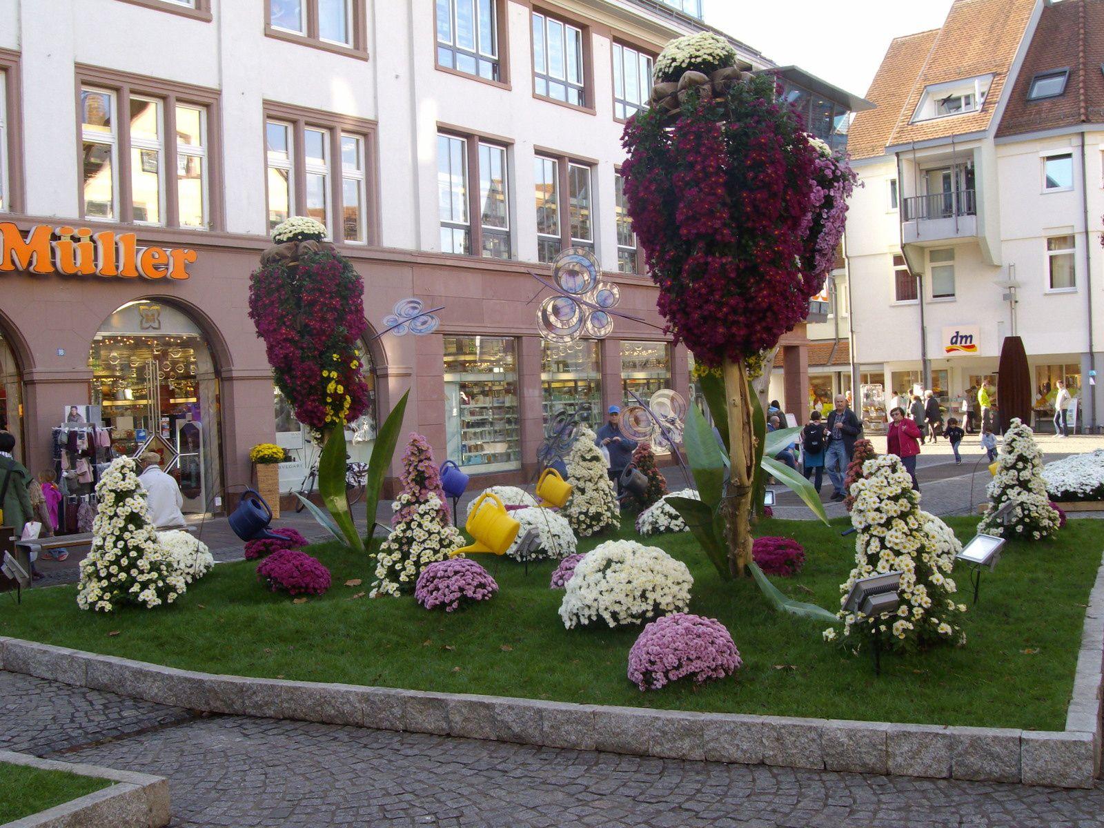 Chrysanthema à Lahr