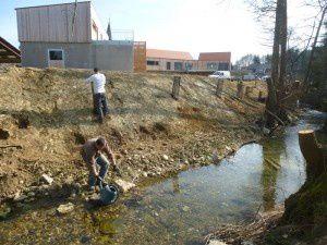Végétalisation des talus à l'aide d'essences typiques des ripisylves du Sundgau
