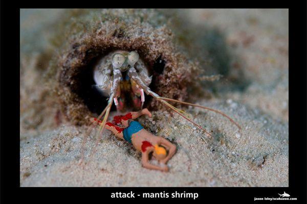 Des touristes photographes pris en photo....et la très réaliste attaque de l'homme par une crevette!