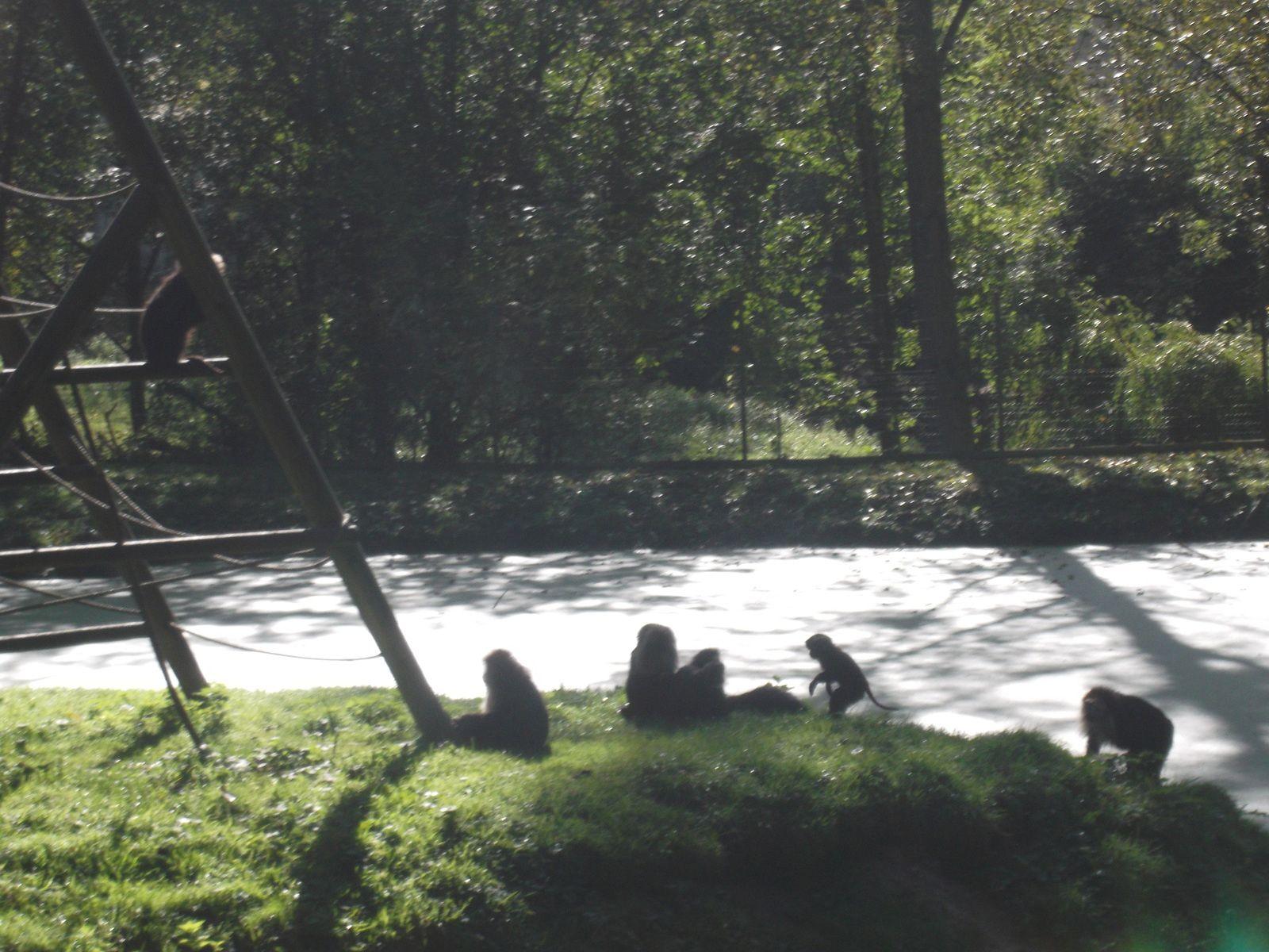 sortie au zoo de Cerza (1)